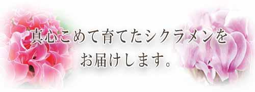 ペットセレモニー所沢の紹介スマホ用